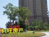 【店长推荐】中央新城 皖江大道 绿地实验学校 毛坯