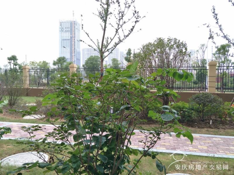 绿地四期 小高层架空一楼 送地下车位 125平毛坯大三房